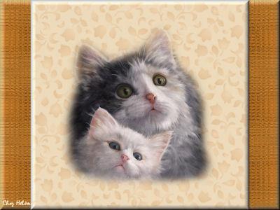 Deux minous petits