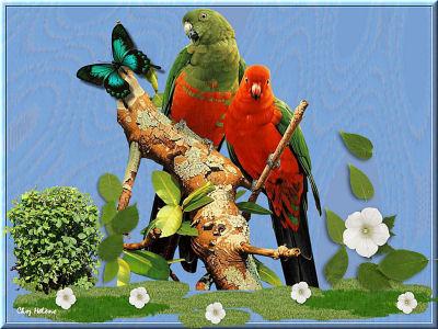 Perroquet petit