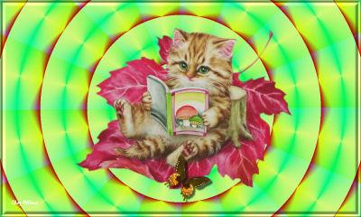 Petit chat qui lit pet9it