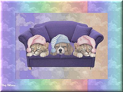 Trois peitis chats petits